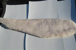 alaskan-halibut-fillet