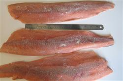 usa-chum-salmon-fillet-skinless-1